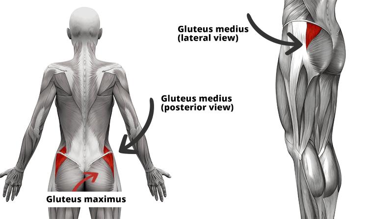 elveszíti a zsírt gluteus maximus