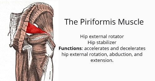 the-piriformis-muscle